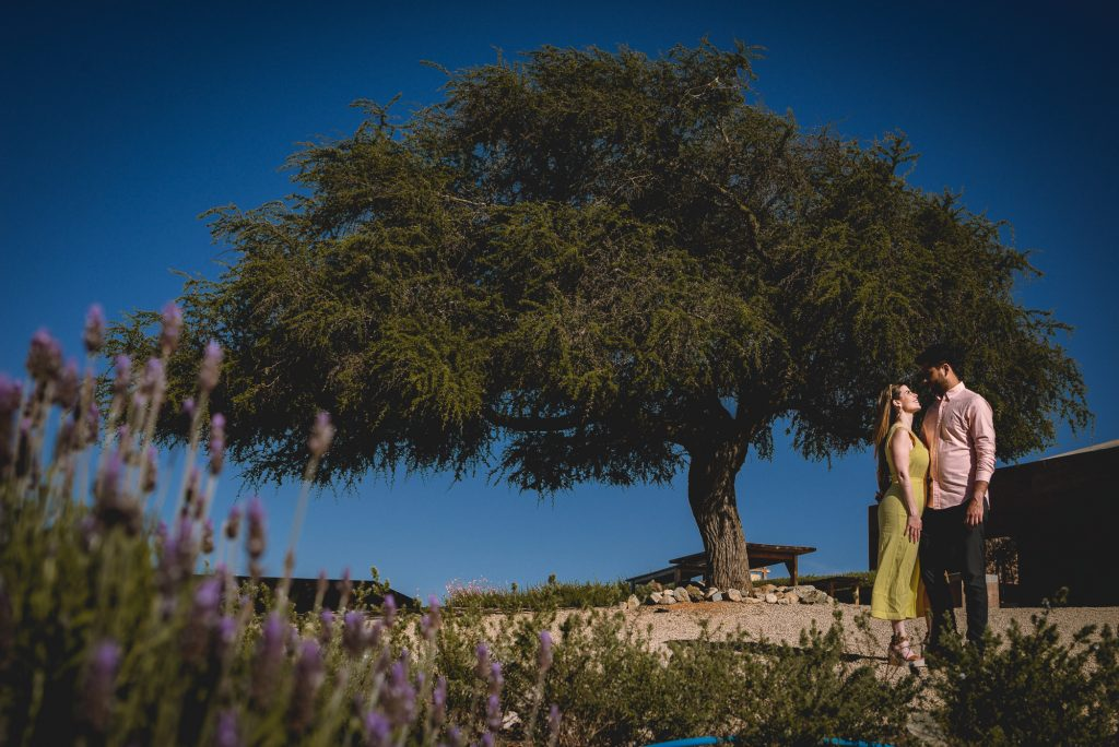 sesion pre boda en viña casas del bosque CHile